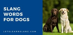 slang words for dogs