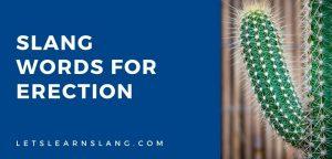slang words for erection