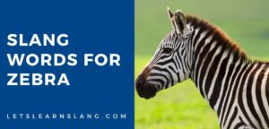slang words for zebra